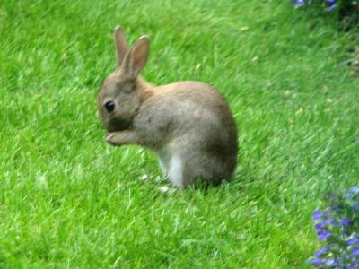 Rabbit_08081302s